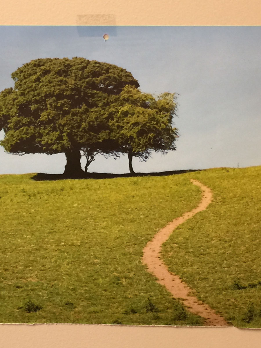 Path leading up hill past large tree