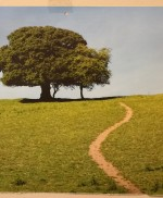 Tree on hill with path
